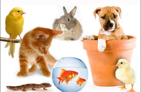 قبل از انتخاب حیوان خانگی، به چه نکاتی را در نظر داشته باشیم