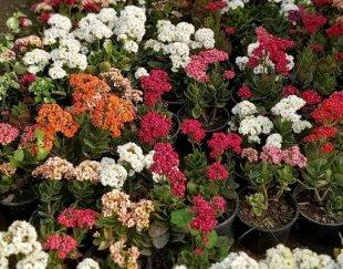 فروش انواع گل و گیاه آپارتمانی
