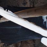 یک جفت کبوتر پلاکی