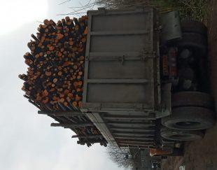 فروشنده انواع چوبهای صنوبر وجنگلی