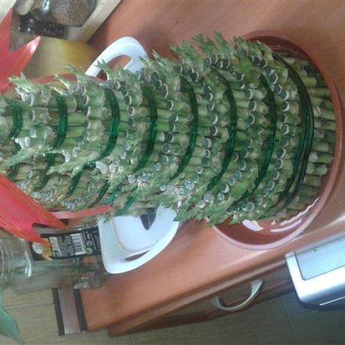 گل بامبو برجی و لاکی تایلندی