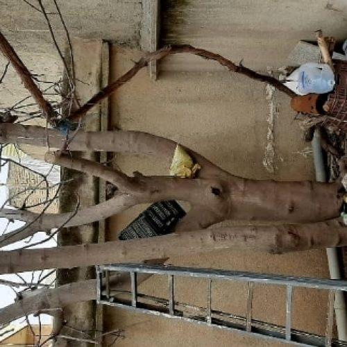 خرید انواع درخت با قیمت روز