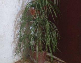 درخت نخل مصنوی