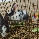 فروش فوری خرگوش جفت نر و ماده