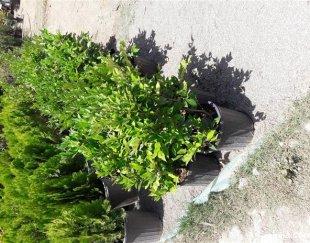 انواع خدمات باغچه گل وگیاه وفضای سبز وسمپاشی