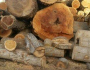 خریدار انواع چوب های باغی با قیمت مناسب