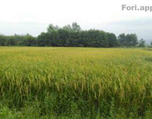 فروش زمین زراعی