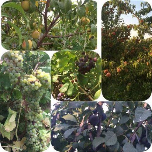 باغ ویلایی بسیار شیک و زیبا – روستای عمروآباد منظریه