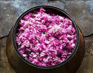 تور یک روزه جشنواره گل و گلاب میمند