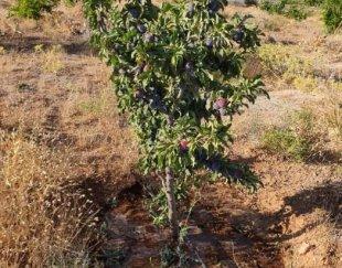 فروش باغ ۳ هزار متری واقع در خالد آباد