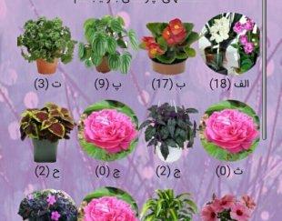 نرم افزار گلهای آپارتمانی