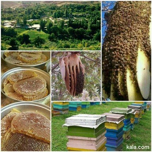 عسل اورگانیک و طبیعی گنجدان