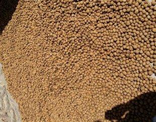 فروش گردو خشک تویسرکان
