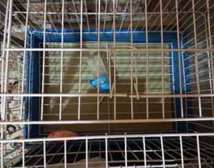 قفس خرگوش یا همستر