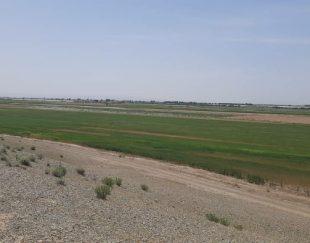 ۸هکتارزمین کشاورزی در پیشوا ورامین