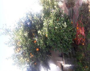 فروش باغ در شمال، در روستای پاشا کلا،زیر قیمت منطقه