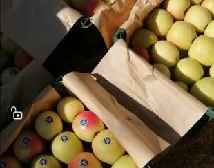 فروش سیب