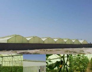 مجموعه گلخانه ای(پرورش خیار، دام، ماهی و قارچ)
