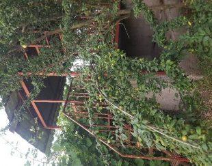 باغ ویلاوآلاچیق