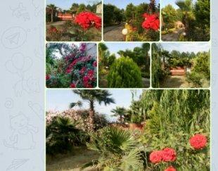 باغ تجاری آمل چمستان محمودآباد شمال