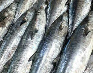 ماهی فروشی بندر گناوه