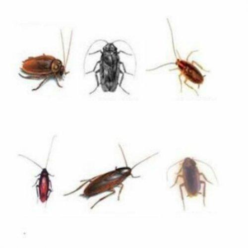 سمپاشی حشرات موذی و ناقلین