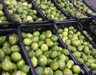 خرید وفروش انواع لیمو محلی وسنگین