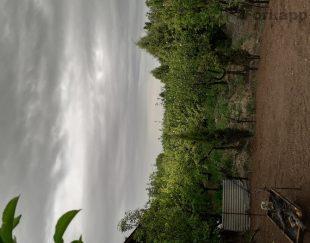 باغچه فروشی