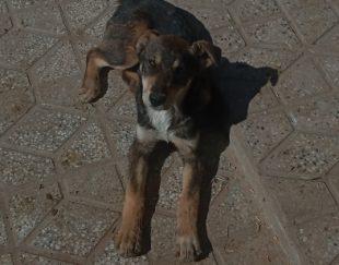 فروش توله سگ