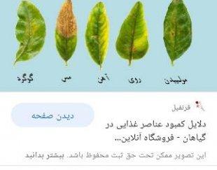 خدمات کشاورزی باغبانی  سمپاشی  گل کاری بیل کاری تبریز