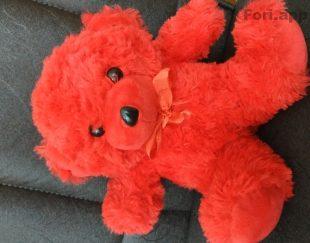 خرس قرمز