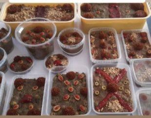 محصولات زیتون پرورده با کیفیت بالا و ارسال به سراسر کشور