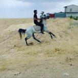 اسب عرب مصری