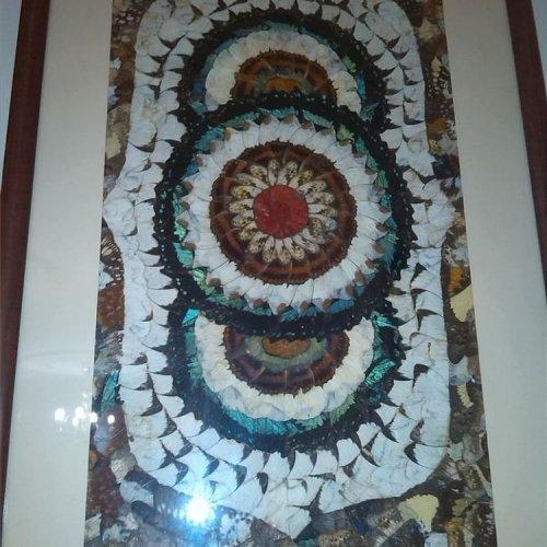 تابلویی از پال پروانه طبیعی
