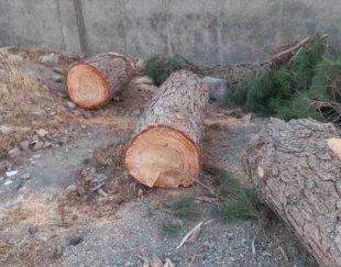 خریدار چوب ذغالی و صنعتی و ریشه درخت