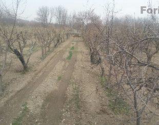 زمین_شهرکی موقعیت دسترسی عالی درختکاری شده