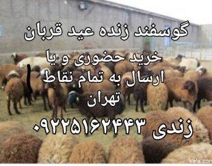 گوسفند زنده ویژه عید قربان