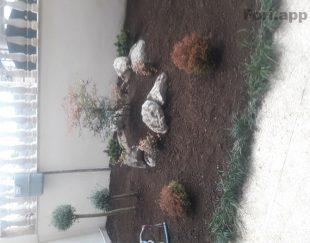 علفتراشی و نگهداری  گل و گیاه ویلا