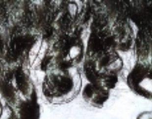 خریدار موی ۲۰ سانت تا ۱متر به بالا
