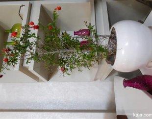 فروش گل انار زینتی زیبا