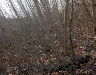 انواع درخت و نهال