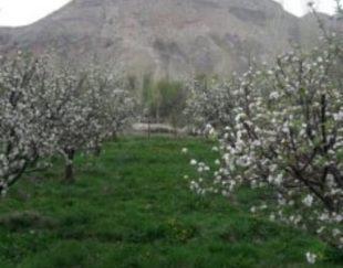 ۲۸۵۰ متر باغ در هرانده
