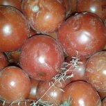 گوجه مشکین