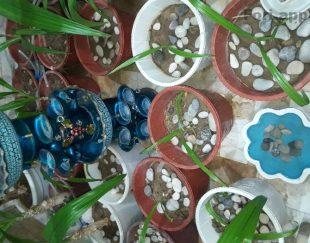 فروش ویژه گل
