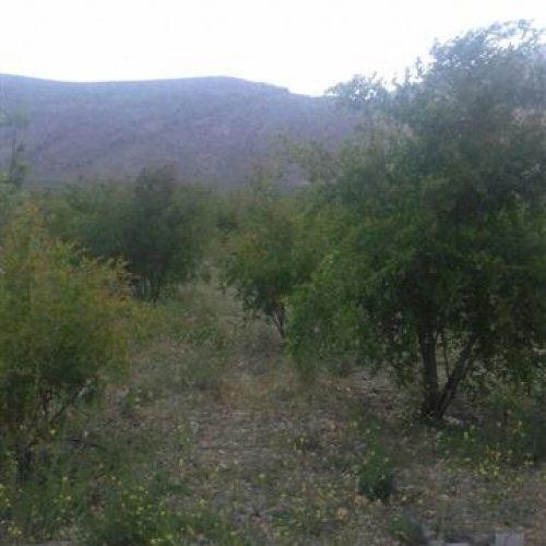 فروش باغ و ویلا – ۴ هکتار در جاده مرودشت