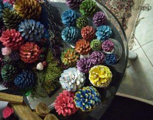 کاج رنگی تزئینی در رنگهای دلخواه