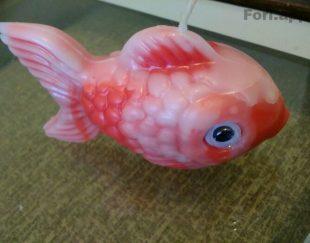 شمع. ماهی
