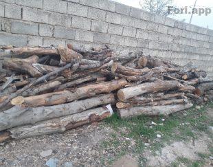 فروش چوب صنعتی چنار گردو..وچوب ذغال ریشه