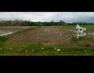 فروش زمین کشاورزی۶هزارمتری