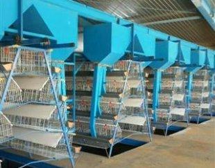 فروش قفسهای اتوماتیک و سنتی